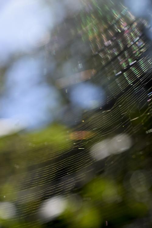 spider_web_15_9_28.jpg