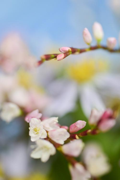 various_flowers_14.jpg