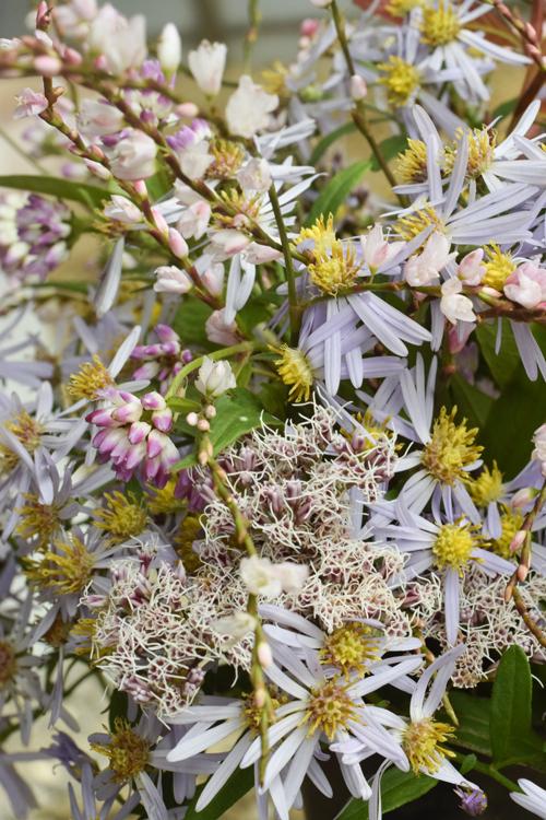 various_flowers_17.jpg