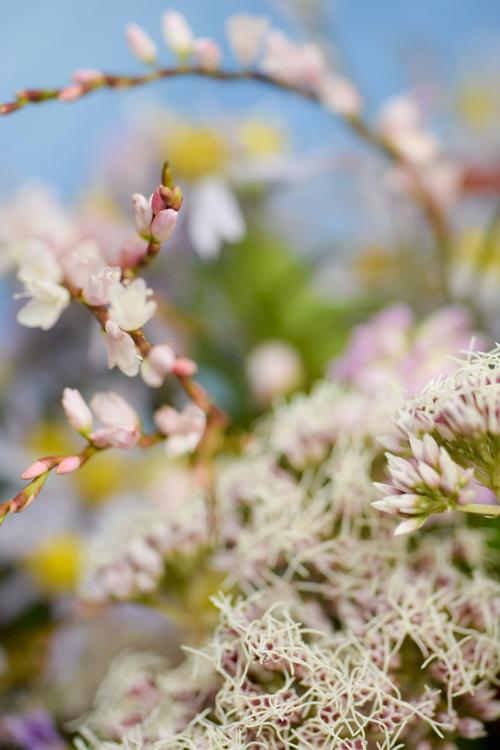 various_flowers_18.jpg