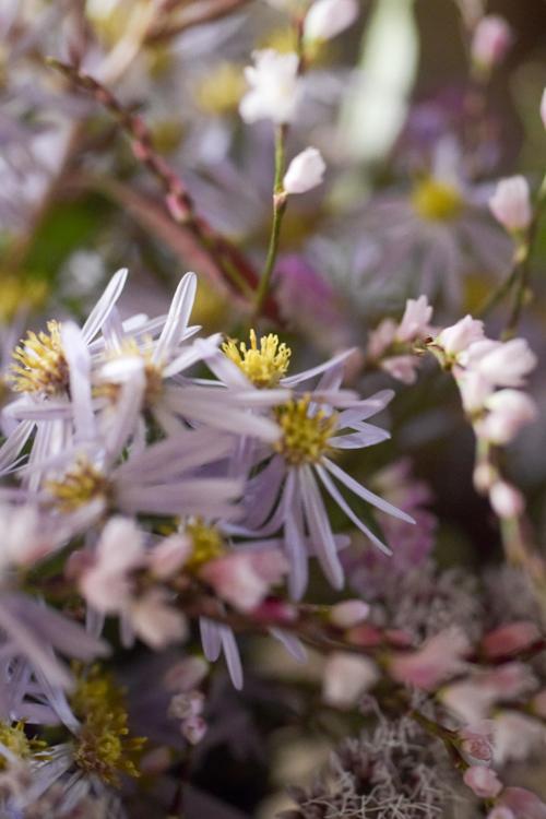 various_flowers_20.jpg