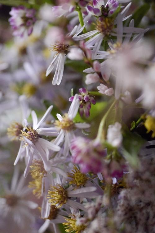 various_flowers_21.jpg