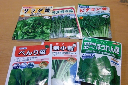 葉物野菜の種