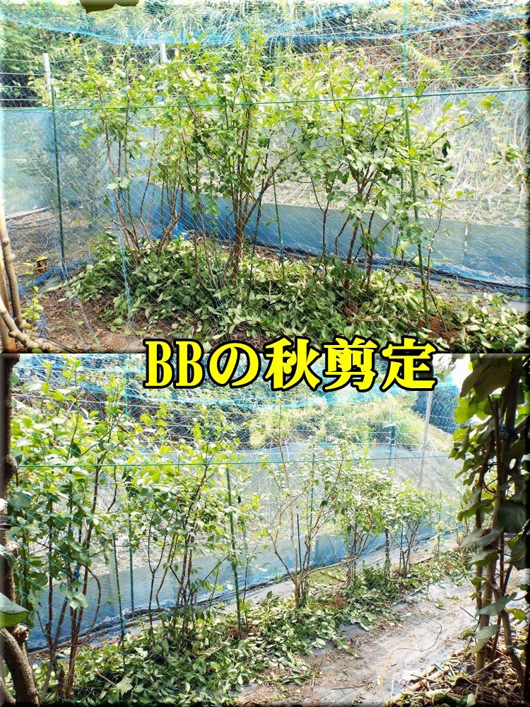 1BB150922_004.jpg