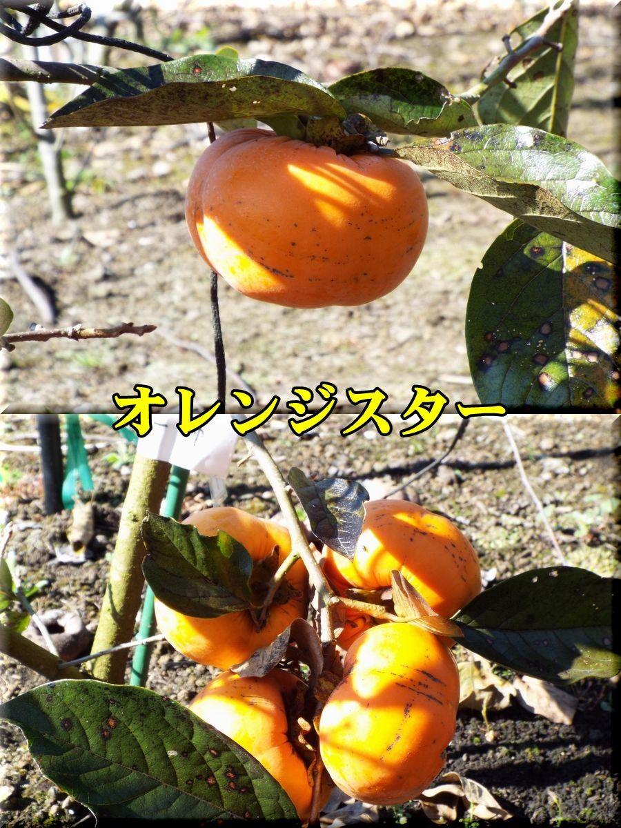 1Ostar151105_002.jpg