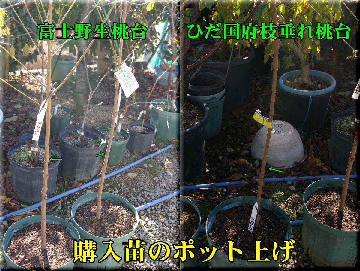 1fujiyasei151205_004.jpg