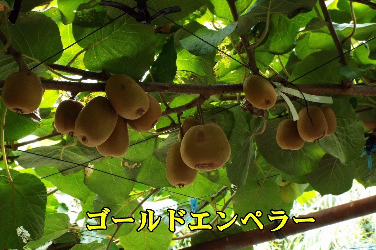 1goldE150919_012.jpg