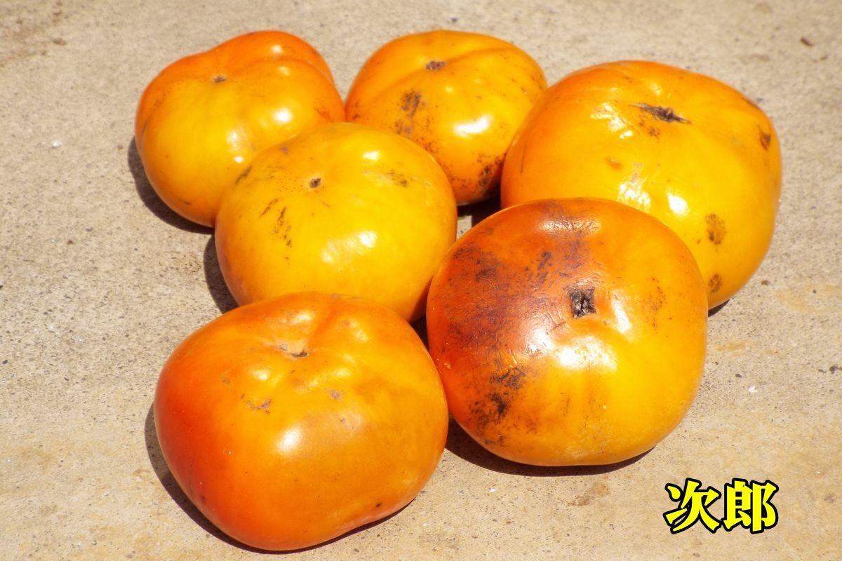 1jirou150928_006.jpg