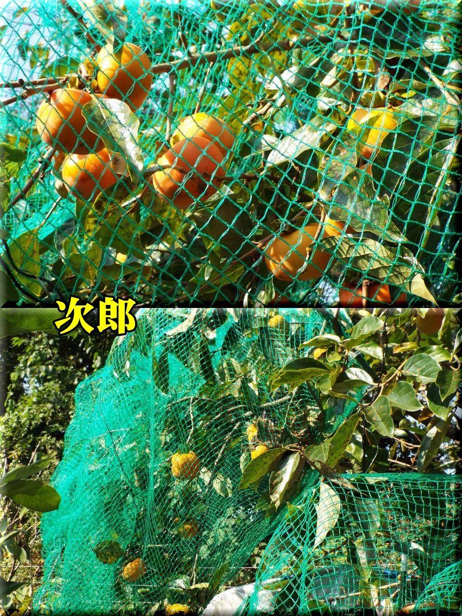 1jirou151015_004.jpg