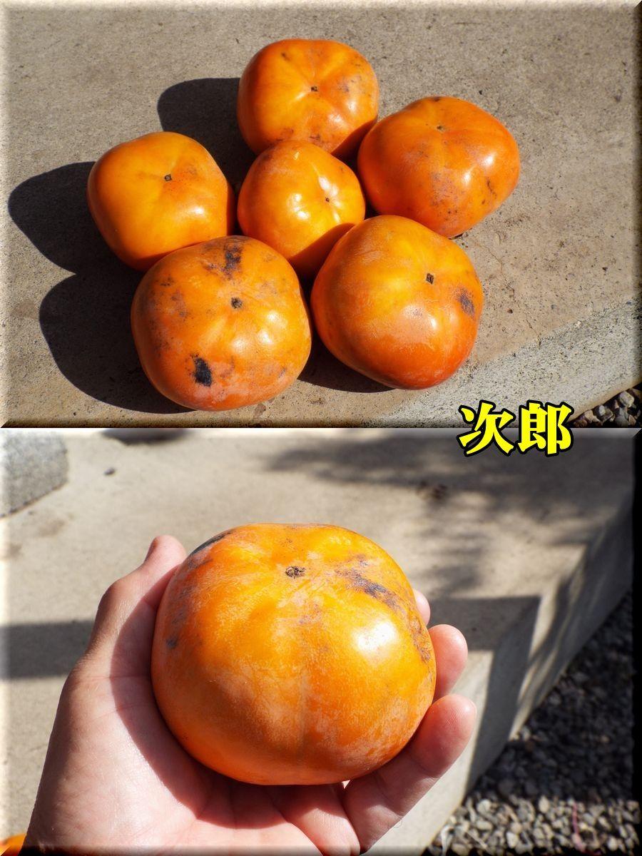 1jirou151015_007.jpg