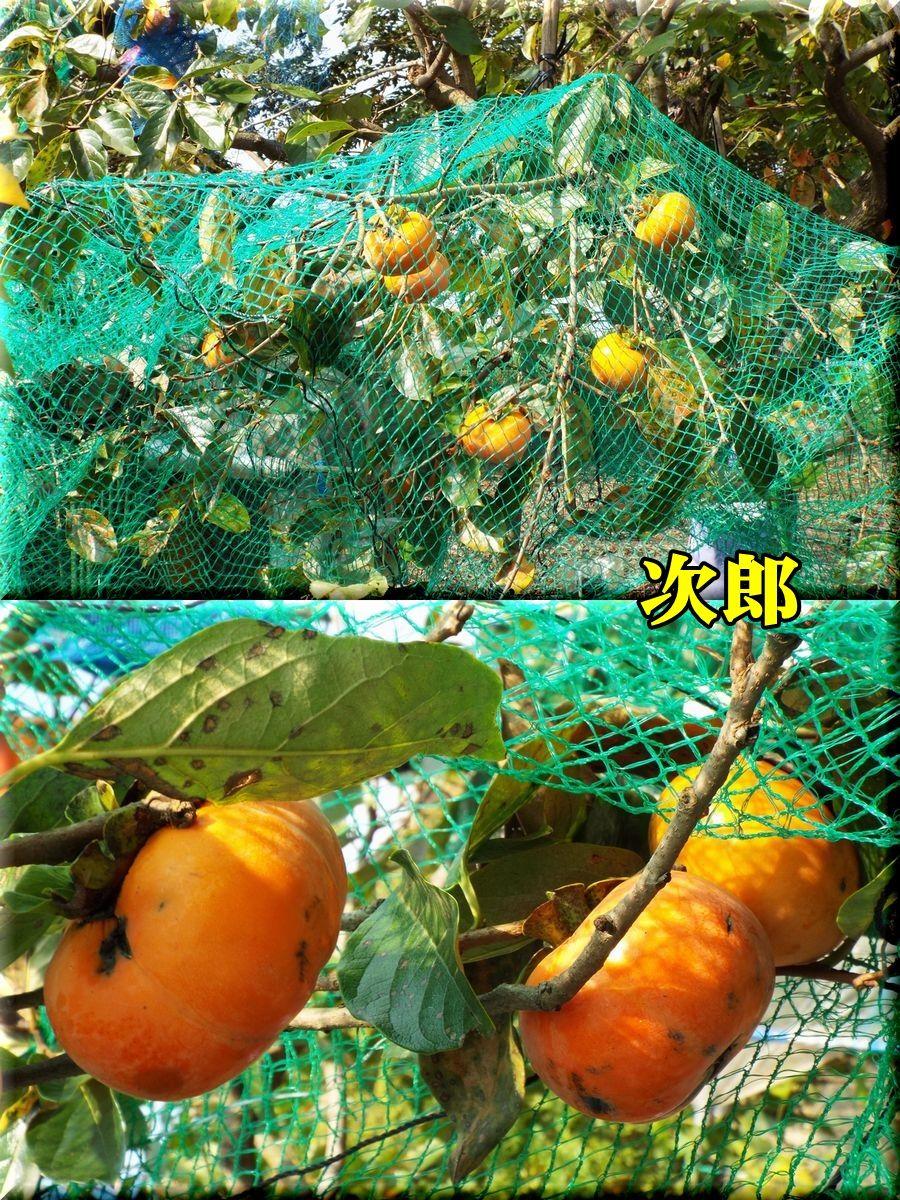 1jirou151023_001.jpg