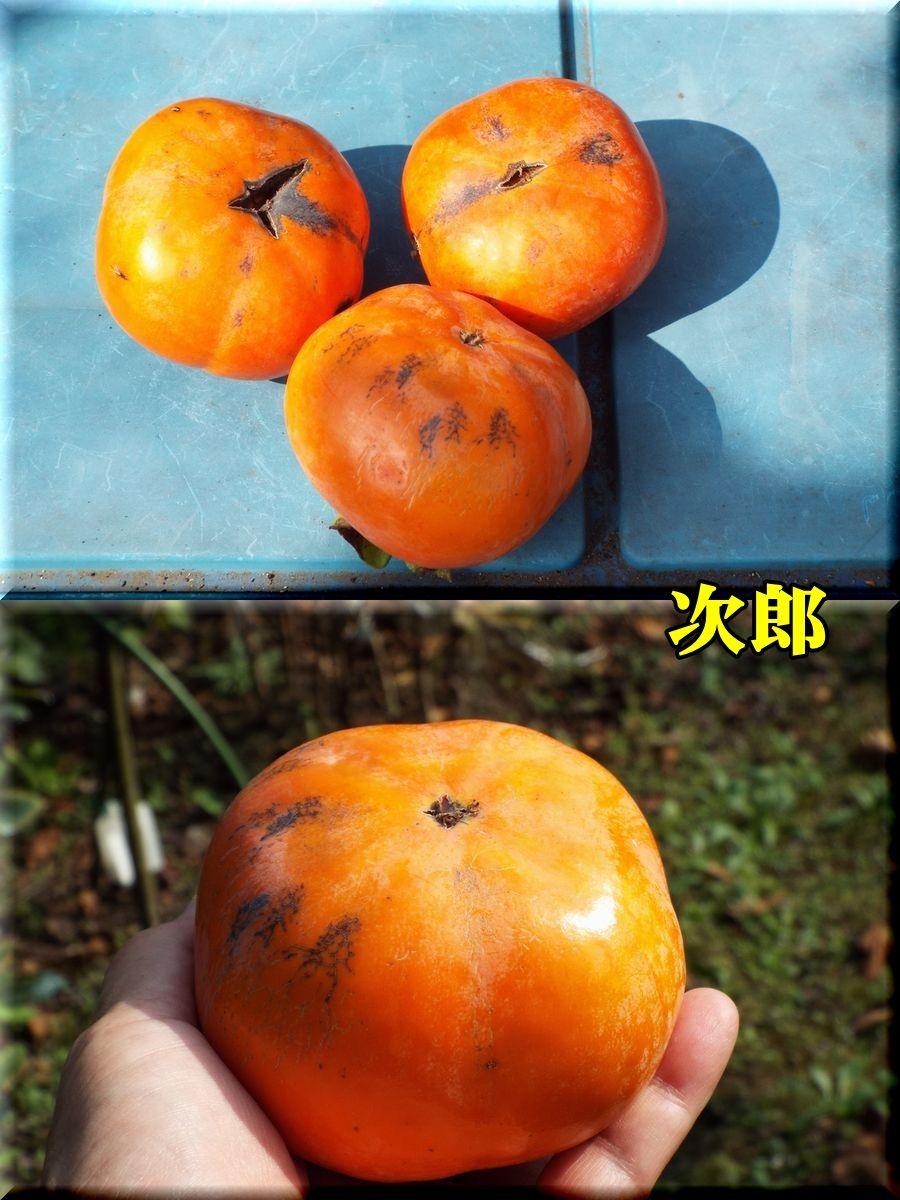 1jirou151023_004.jpg