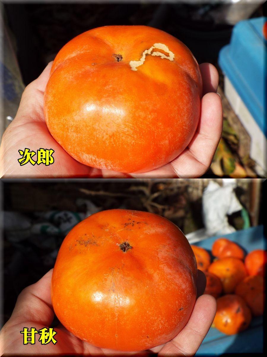 1jirou151027_002.jpg