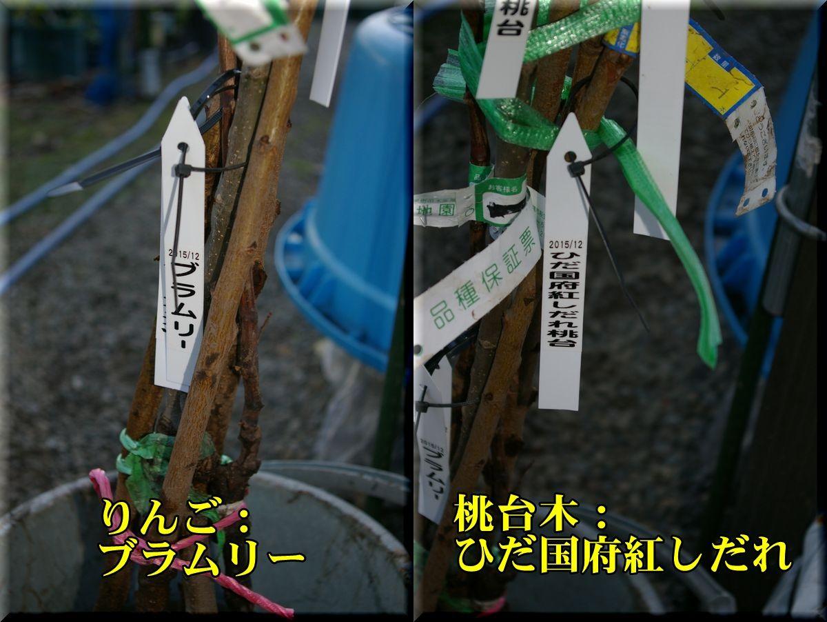 1naeki151204_003.jpg