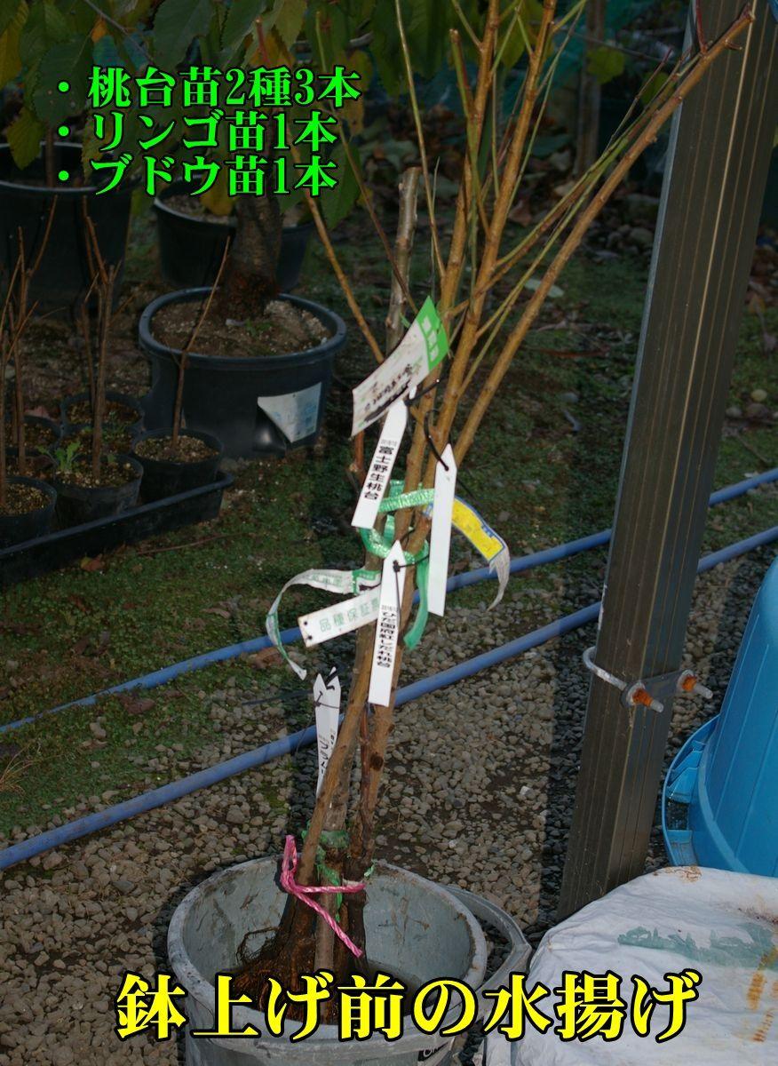 1naeki151204_008.jpg