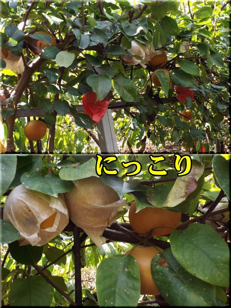 1nikkori150923_003.jpg