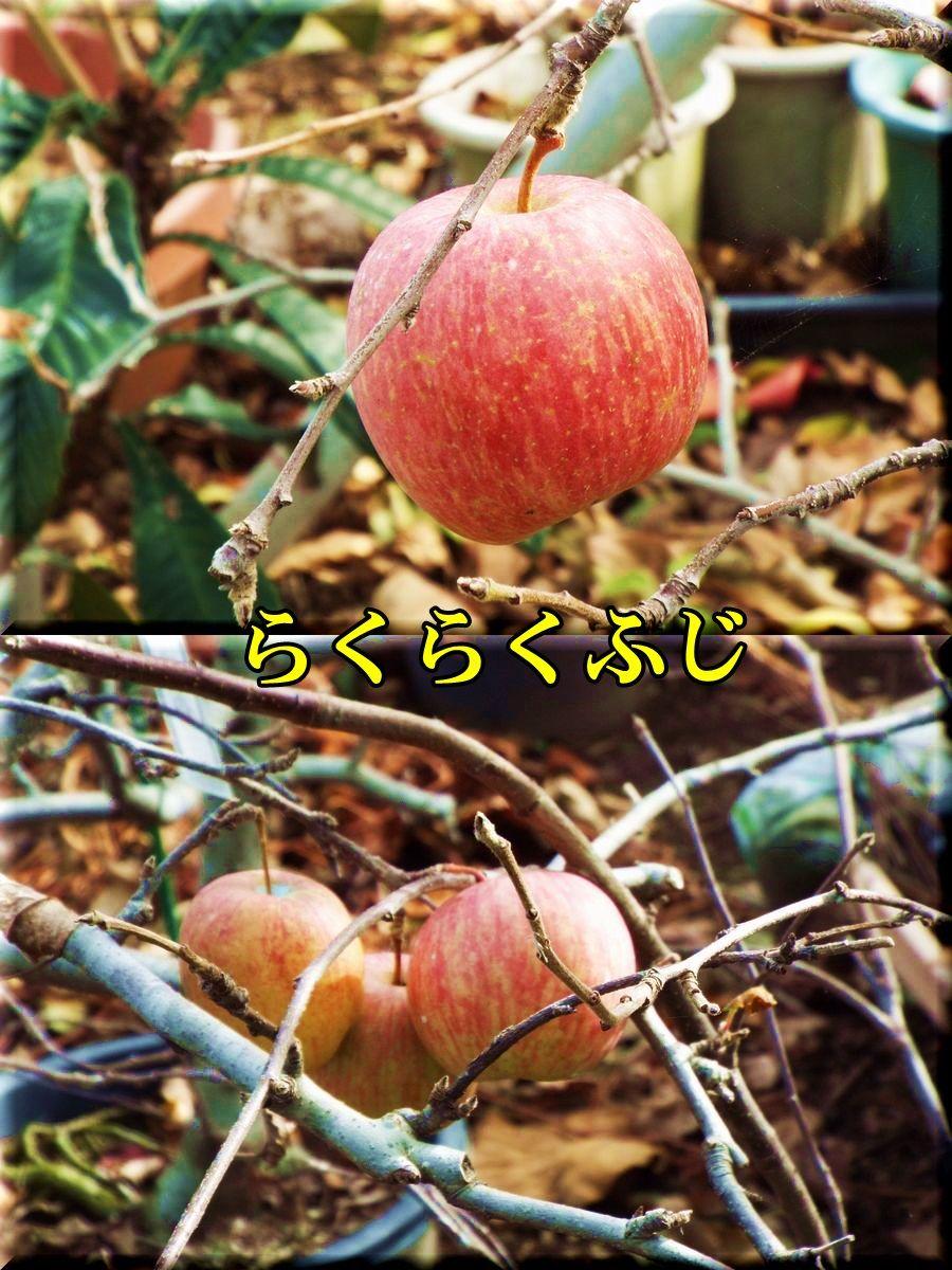 1rakufuji151206_004.jpg