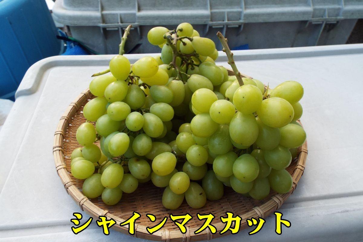 1shainM51003_001.jpg