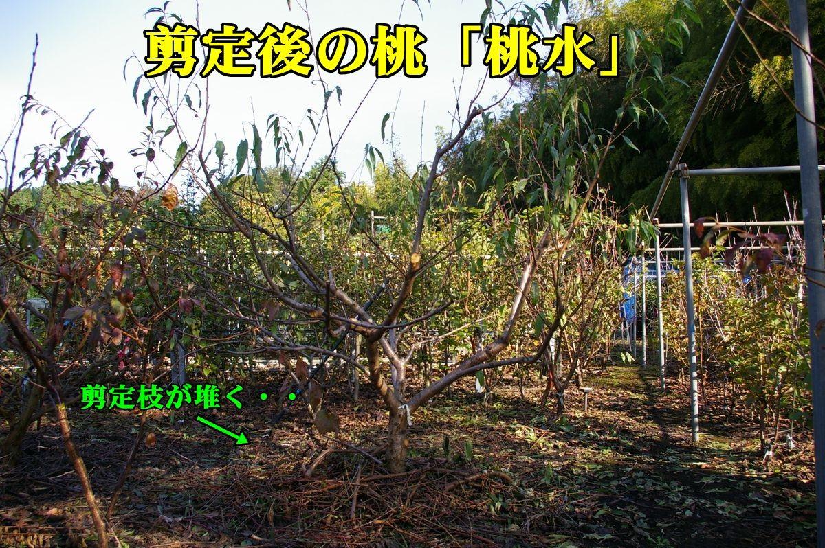 1tousui151113_005.jpg