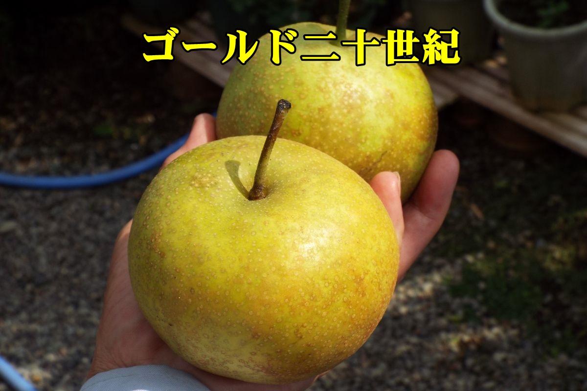 2G20seiki150914_011.jpg