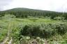 三ツ石湿原2