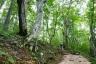 白神の森遊山道2