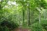 白神の森遊山道4