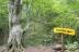 白神の森遊山道8b・熊の爪あと