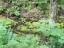 白神の森遊山道8d・森の湧きつぼ
