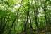白神の森遊山道9