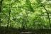 白神の森遊山道10