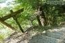 表丹沢県民の森分岐