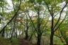鍋割山稜の黄紅葉1