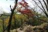 鍋割山稜の黄紅葉3