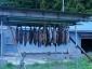 箕輪鮭採捕場