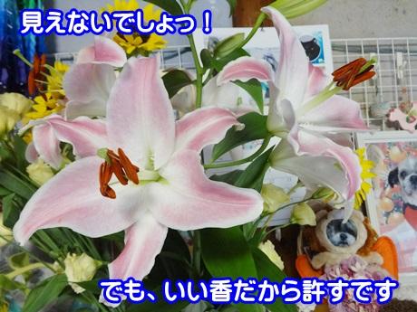 0901-05_20150901142752775.jpg