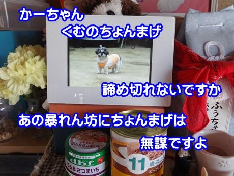0912-06_20150912135210de0.jpg
