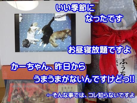 1002-05_2015100216125537c.jpg