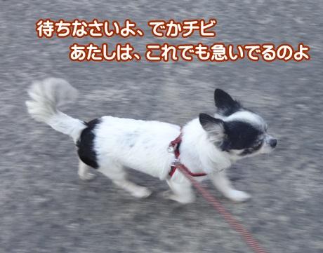 1105-04_20151105195247f6f.jpg