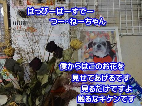 1105-07_20151105195257736.jpg