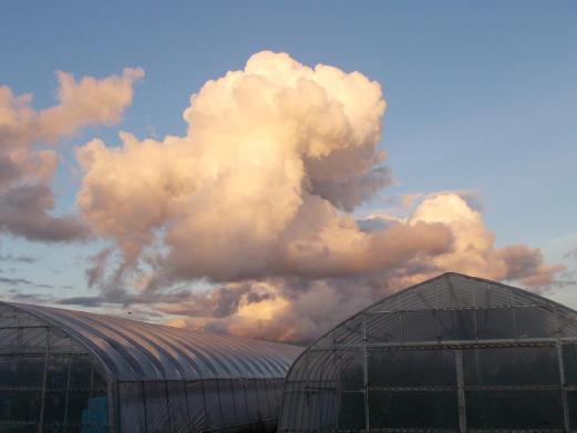 20150905_夕方の積雲1