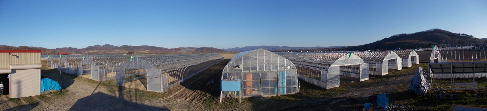 20151107_15線農園東側