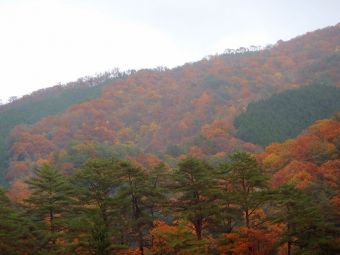 恐羅漢山 013-001