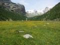 IMG_0794お花畑とアルプス