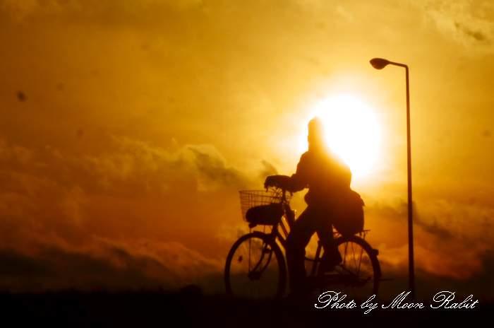 自転車に乗る人 愛媛県西条市古川 加茂川土手