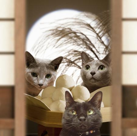 月見猫団子