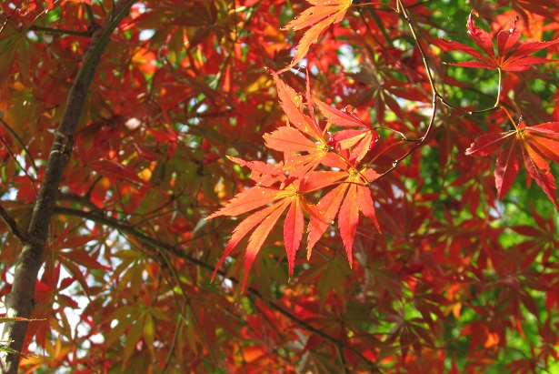 kobayashi-momizi151121-101.jpg