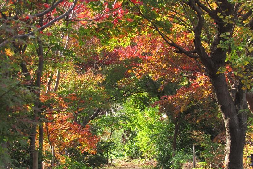 kobayashi-momizi151121-102.jpg