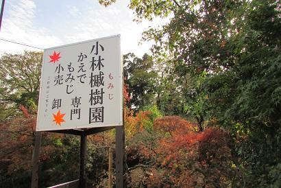kobayashi-momizi151121-104.jpg