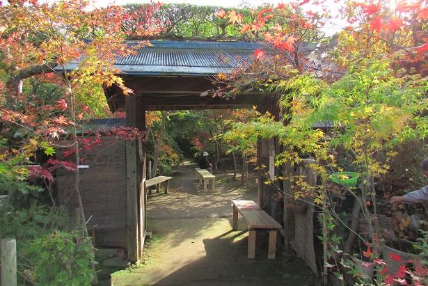 kobayashi-momizi151121-111.jpg